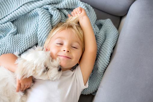 Prendre les précautions nécessaires dans la relation entre bébé et animaux de compagnie